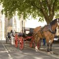 07 horse cart minster